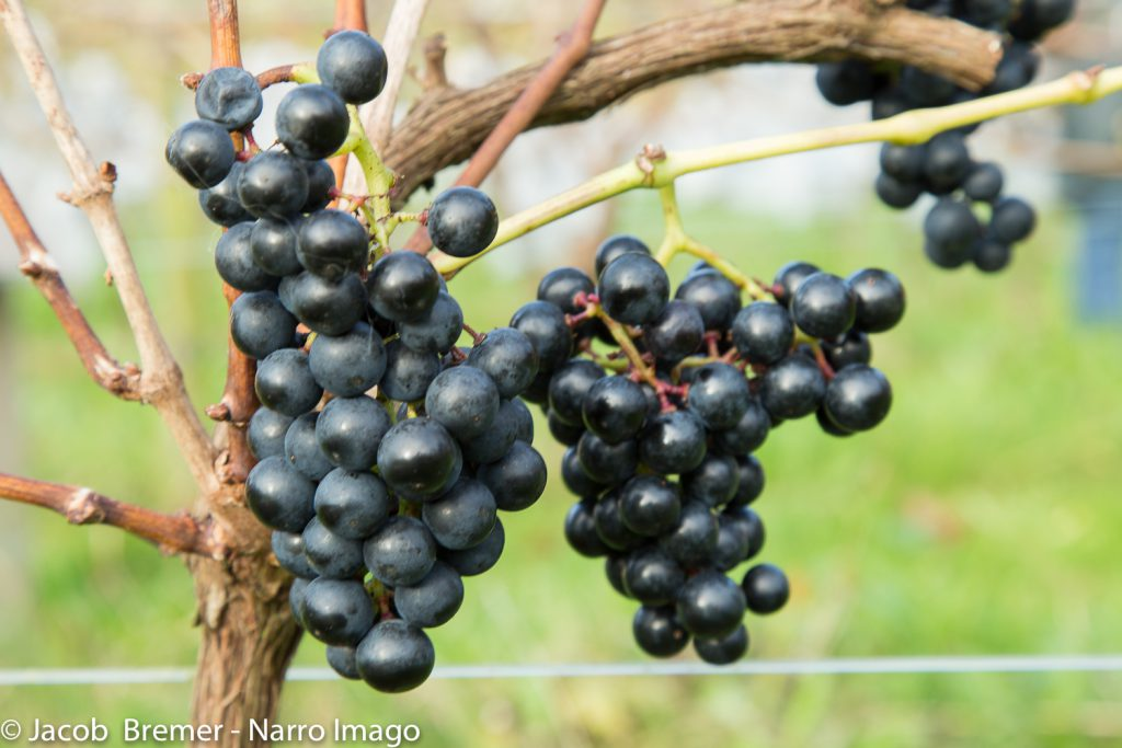 druiventrossen