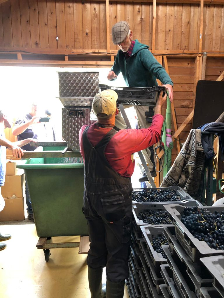 druiven in kneuzer-ontsteler