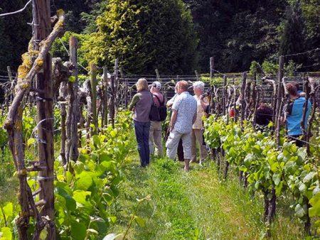 rondleiding biologische wijngaard